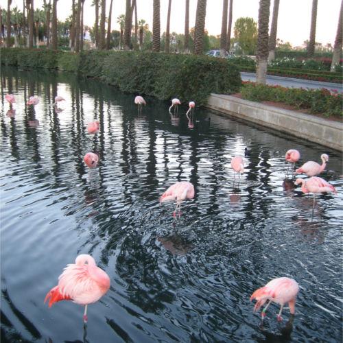 Flamingos500